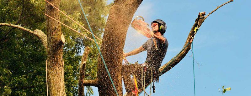 Expert Tree Service in Louisville KY